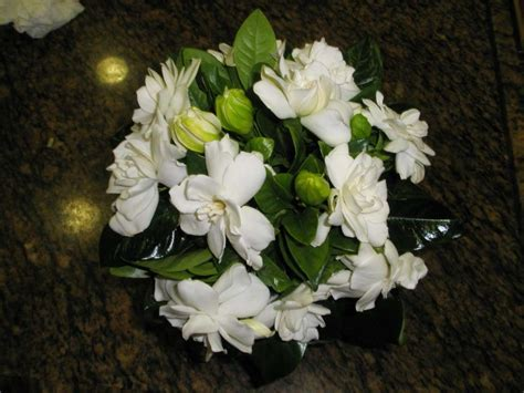 imagenes de flores gardenias ramos de novia fotos de las mejores opciones foto