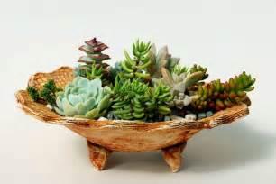 Easy Indoor Gardening Ideas - how to make a dish garden tickets sat aug 6 2011 at 10 00 am eventbrite