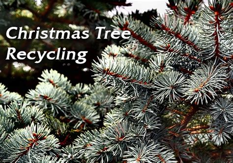 christmas tree recycling issaquah southlake tree recycling program returns for another year mysouthlakenews