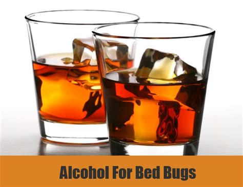 bed bugs and alcohol 5 bed bugs home remedies natural treatments cure