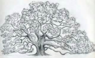 Oak Tree Drawing Old Oak Tree Drawing Images Amp Pictures Becuo