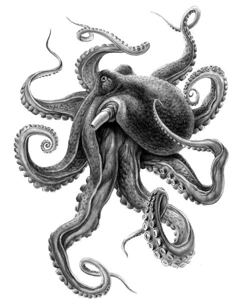 octopus tattoo design image result for octopus sleeve black and white