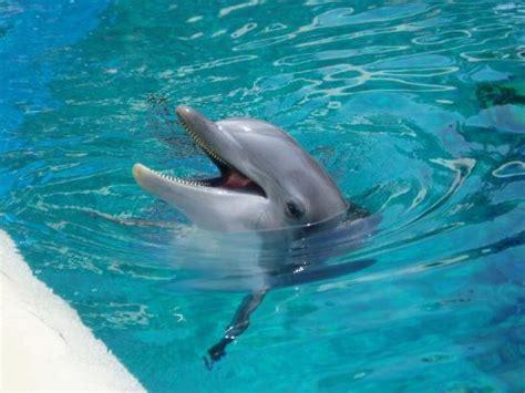 Secret Garden And Dolphin Habitat by Siegfried Roy S Secret Garden And Dolphin Habitat Las