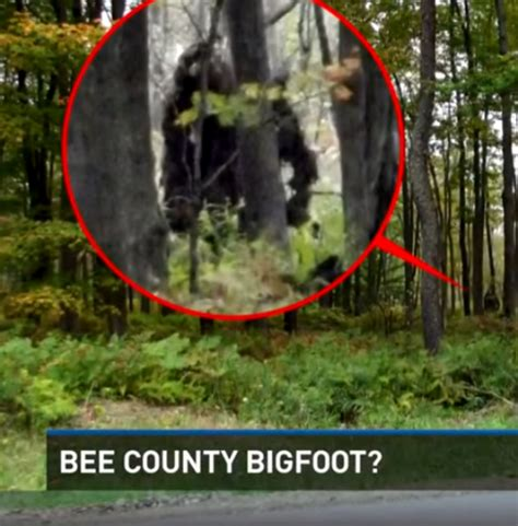 Big Foot Search Search For Bigfoot In Bee County Crypto Sightings