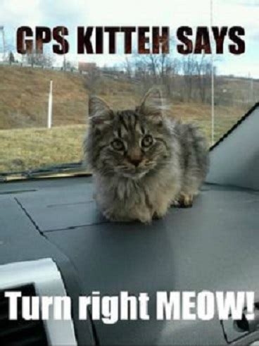 Cat Pictures Meme - gps kitten funny cat meme