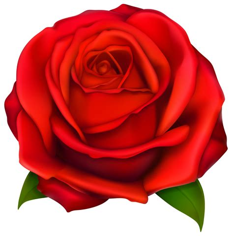 red rosa a graphic image of clip art red rose 7092 red roses clip art images free clipart spring