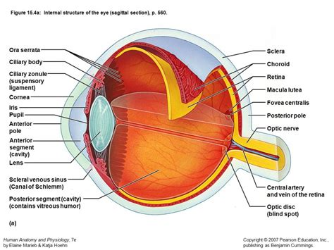 a diagram of a eye anatomy physiology of eye human anatomy diagram