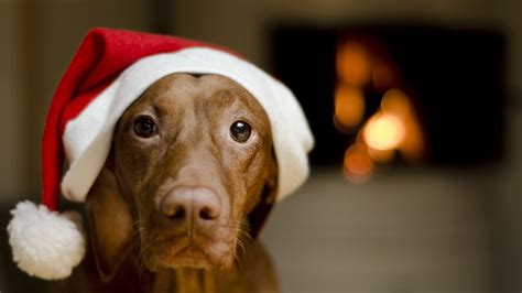 christmas wallpaper with dogs christmas wallpapers dogs wallpapers9