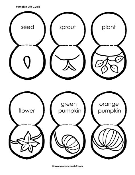 coloring page of a pumpkin seed life cycle of a pumpkin