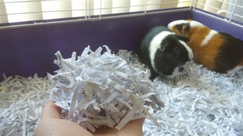 how to make a guinea pig bed diy guinea pig bedding from shredded paper pet hacks