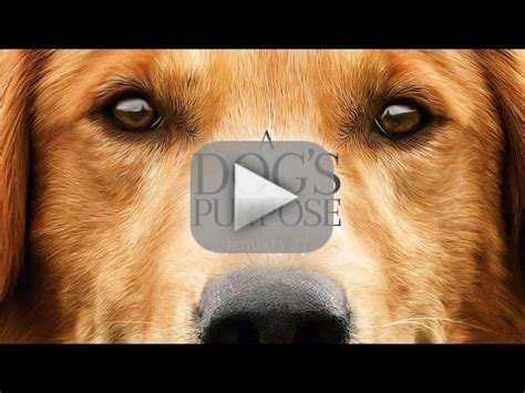 trailer for a s purpose a s purpose premiere press junket canceled amid animal abuse the