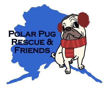 polar pug rescue pugs in alaska home
