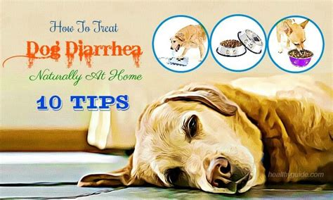 how to cure puppy diarrhea how to treat diarrhea naturally at home 10 tips