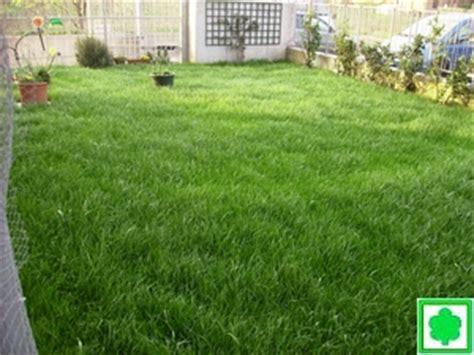 tipi di erba da giardino manutenzione tappeti erbosi