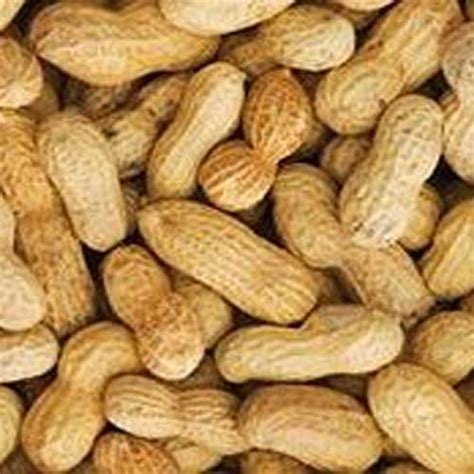 roasted in shell peanuts mississippi made catalog