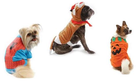 petsmart costumes review and giveaway petsmart costumes giveaway closed christian clippers