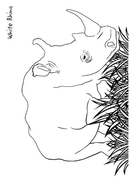 Rhino Coloring Pages Coloring Home Rhinoceros Coloring Page