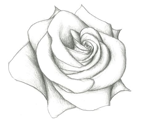 in easy rose drawing coloring pages