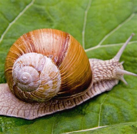 Schnecken Die Schnecken Fressen 5369 by Biologie Schnecken Sind Im 214 Ko System Doch Zu Etwas Nutze
