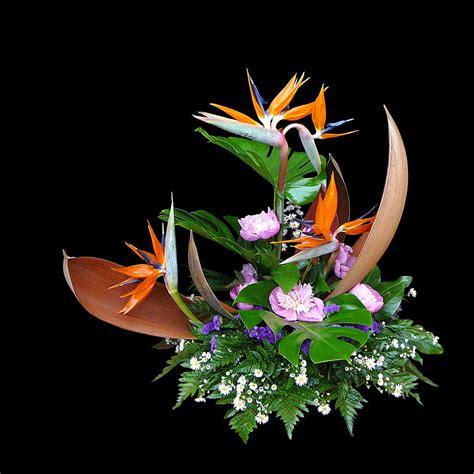 fiore uccelli paradiso fiori uccelli paradiso gpsreviewspot