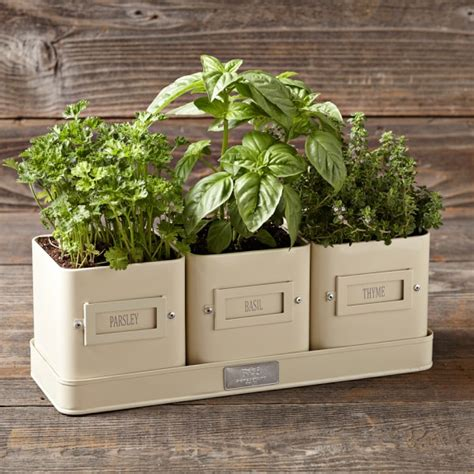 ckb ltd windowsill pots and tray herb planter gift set herb pot with tray williams sonoma