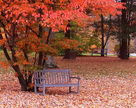 fall bench park bench in fall photograph by jack schultz