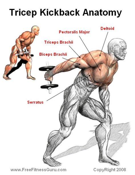 triceps diagram freefitnessguru tricep kickback anatomy