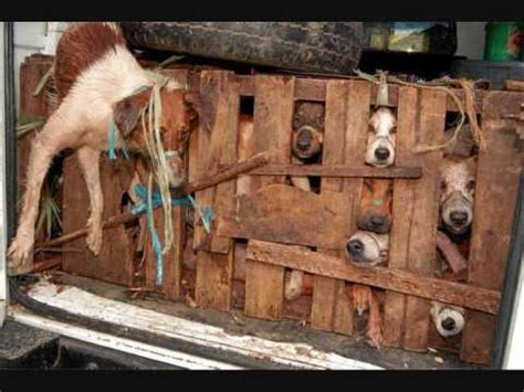 dog slaughter house dog slaughterhouse www pixshark com images galleries with a bite