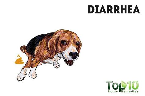 puppy watery diarrhea 10 signs and symptoms that your is sick top 10 home remedies