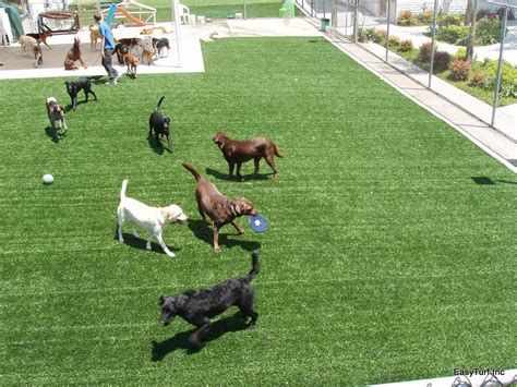 dog in the backyard the best synthetic grass for dogs artificial turf express