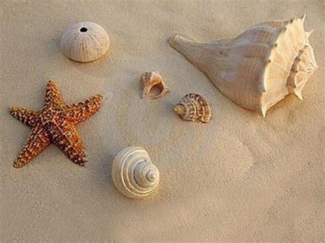 Kerang Mata 7 mengenal dunia kerang dan bintang laut dunia afrina