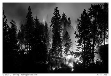 black white black and white picture photo forest fire kings canyon