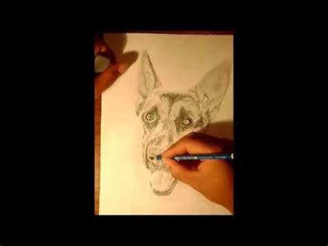 animales a lapiz youtube retrato a lapiz de un perro pastor aleman youtube
