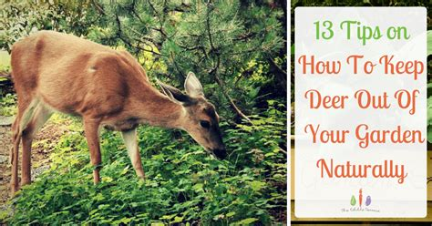 13 Tips On How To Keep Deer Out Of The Garden Naturally How To Keep Deer Out Of Vegetable Garden