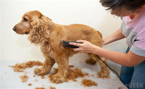 when do puppies get their what does a groomer do with pictures
