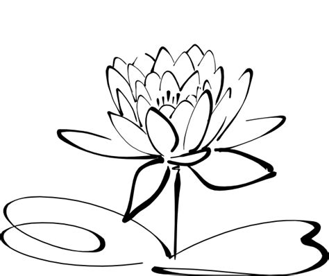 Lotus Black And White Outline by Lotus Clip At Clker Vector Clip Royalty Free Domain