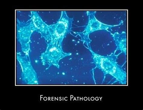 16 best images about i m a forensic pathologist on research paper criminal justice