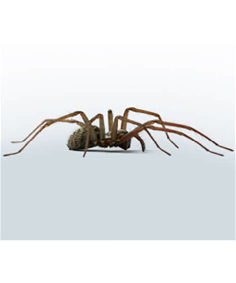how to clean spider webs from house siding spider pest control spider extermination spider infestation madison