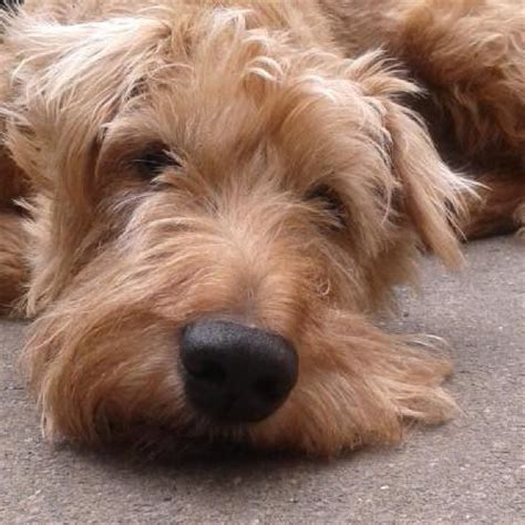 Terrier im Portrait - Rassen, Charakter und Zucht | markt.de