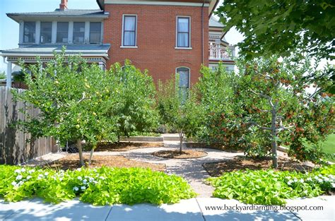 backyard orchard design backyard farming home orchards