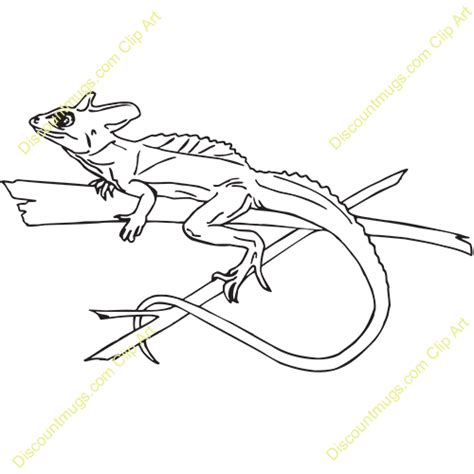 basilisk lizard coloring page basilisk lizard drawing www imgkid com the image kid