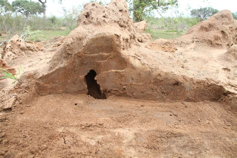 section 1 termite termites unsung heroes of the african bush africa