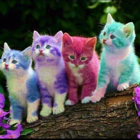 color kittens rainbow kittens colors everywhere kittens