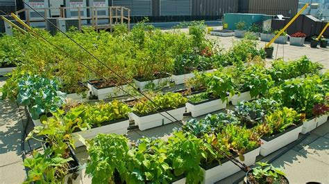 Rooftop Vegetable Garden Gardening Pinterest Rooftop Vegetable Garden