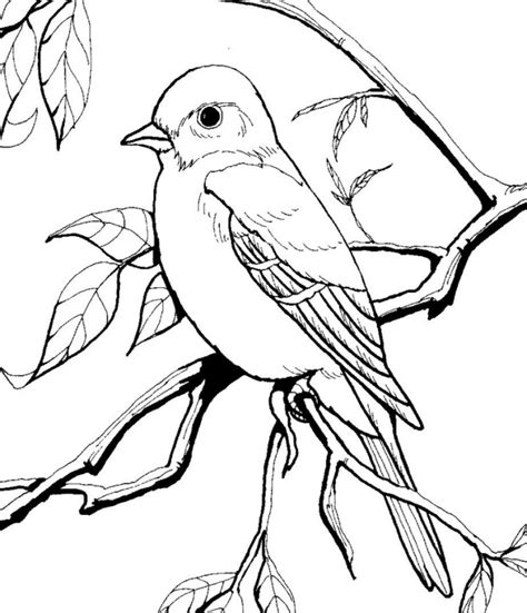 blue bird coloring page az coloring pages