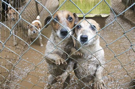 signs of a puppy mill puppy mill dogs will adopt dogs from shelters instead of purchasing
