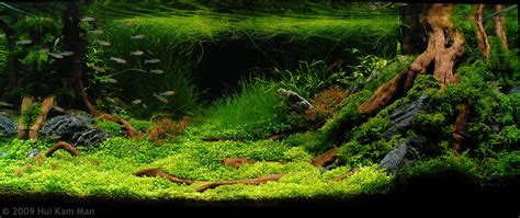 aquascape contest aga aquascaping contest delivers stunning freshwater views