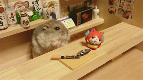 New Best Seller Terowongan Lorong Hamster Plus hamster bartenders are the best bartenders kotaku australia