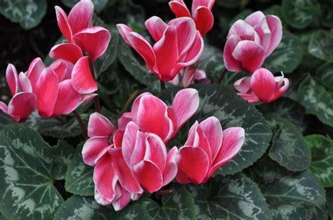 piante con fiori invernali piante invernali da esterno piante da giardino piante