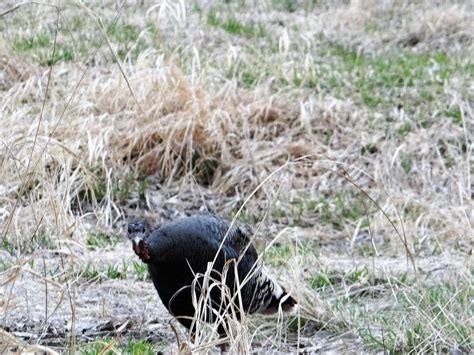 hunter terra spring steel hunting ground blind deer hunting deals 100 wild turkey hunting ground blind killzone